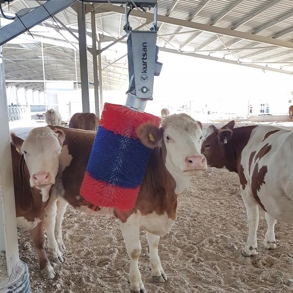 Βούρτσες Αγελάδων